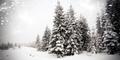 Winter landscape - snowfall in coniferous forest