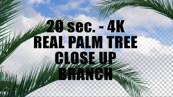 Real Palm Tree Close up Branch with Alpha Channel