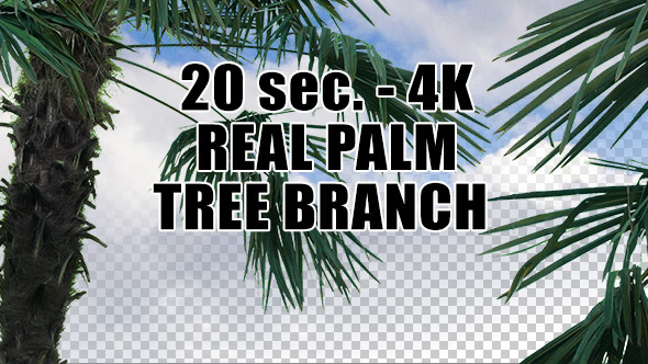 Real Palm Tree Branch with Alpha Channel