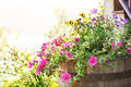 Summer planter - PhotoDune Item for Sale