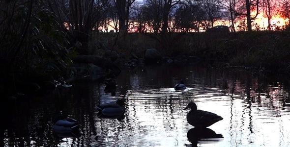 Dusk Ducks Pack 2