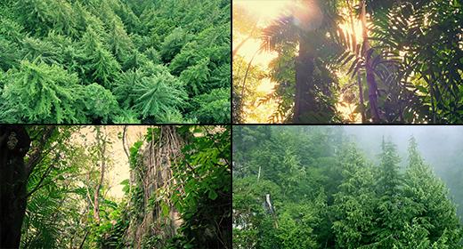 Aerials & Tracking Shots