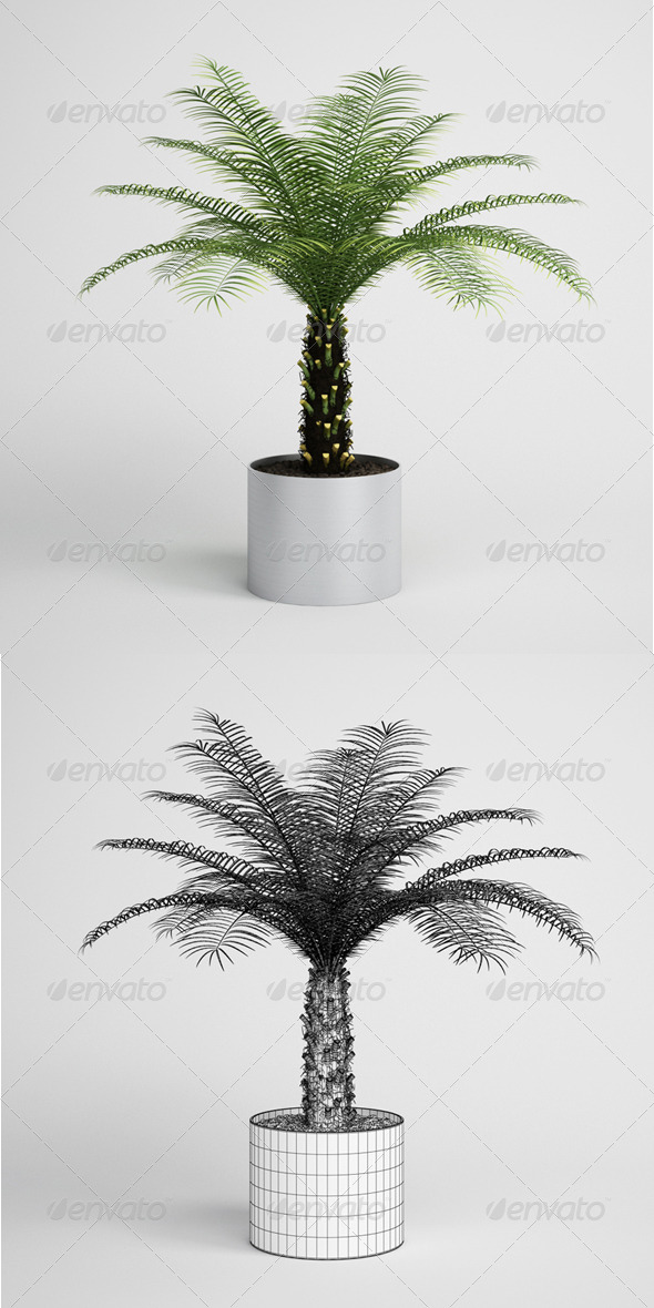 3DOcean CGAxis Palm Tree in Planter 10 164997