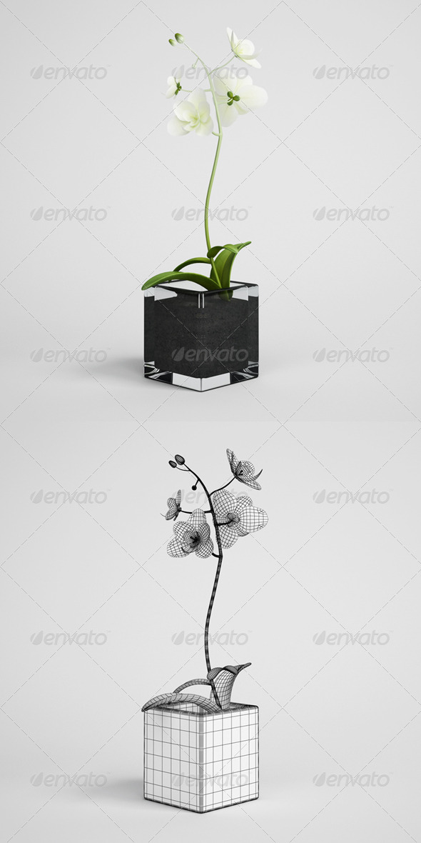 3DOcean CGAxis Potted Orchid Plant 14 165160