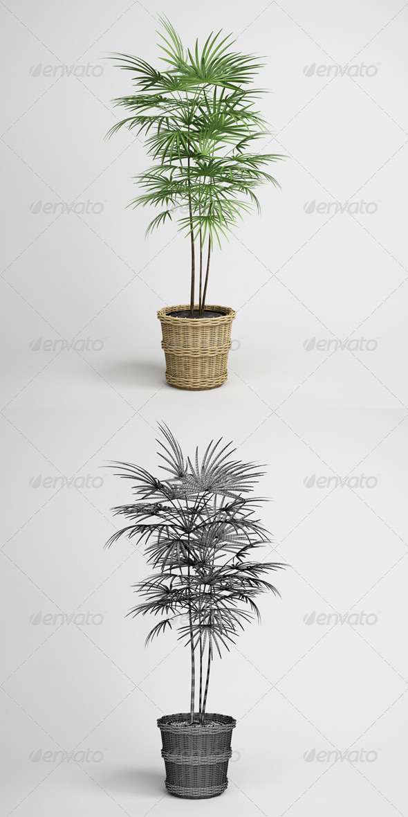 3DOcean CGAxis Potted Palm Tree 16 165164
