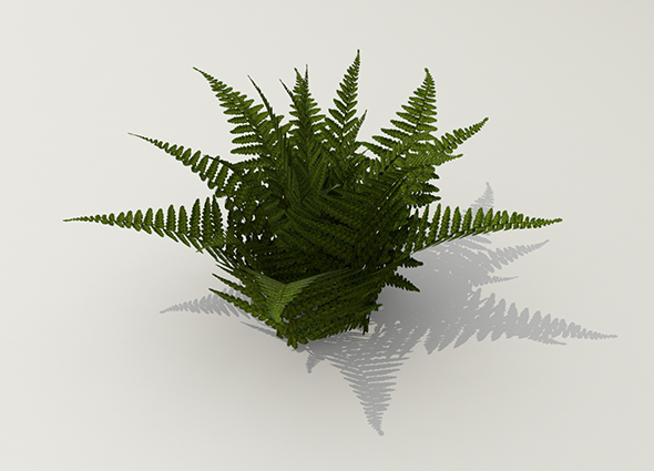 3DOcean Bush fern 13934491