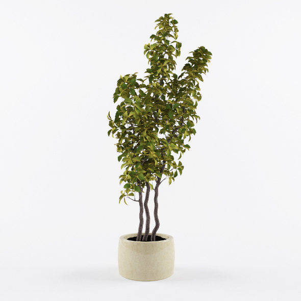 Houseplant pot - 3DOcean Item for Sale