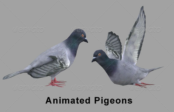 3DOcean 3D Pigeons Skinned Rigged 3D Models -  Animals  Birds 165563