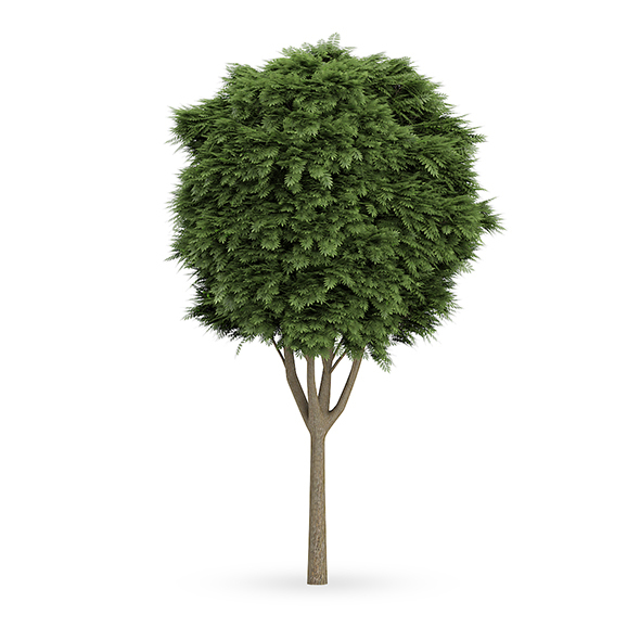Common Ash (Fraxinus excelsior) - 3DOcean Item for Sale