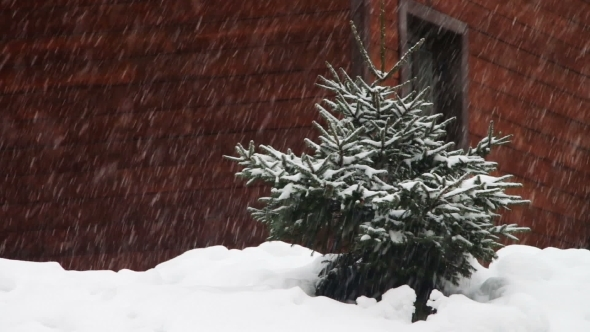 The Snow Is Falling And Christmas Tree.