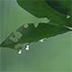 Leaves in the Rain 3
