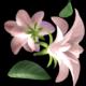Flying Flowers(60 FPS)