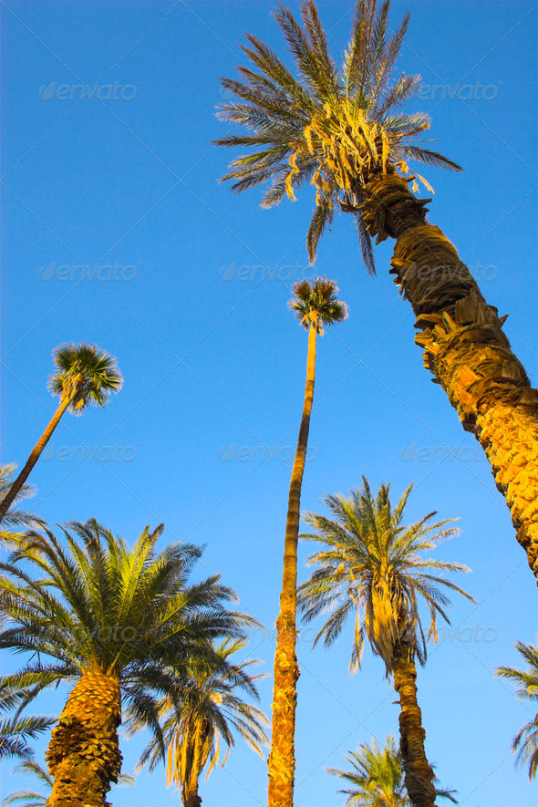 Palms - Stock Photo - Images