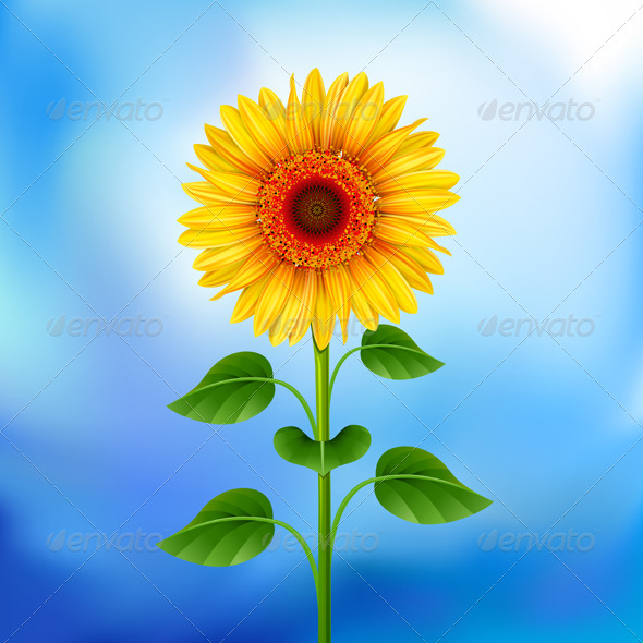 GraphicRiver Sunflower 166689