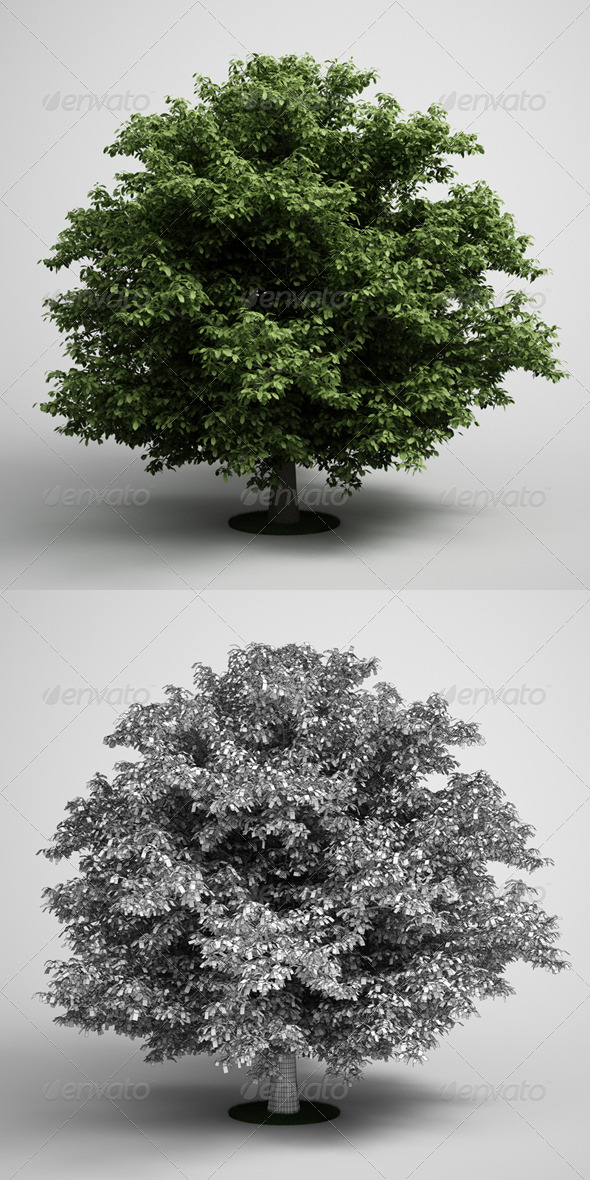 CGAxis Tree Horse Chestnut 02 - 3DOcean Item for Sale