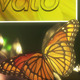 Butterfly Forest - VideoHive Item for Sale