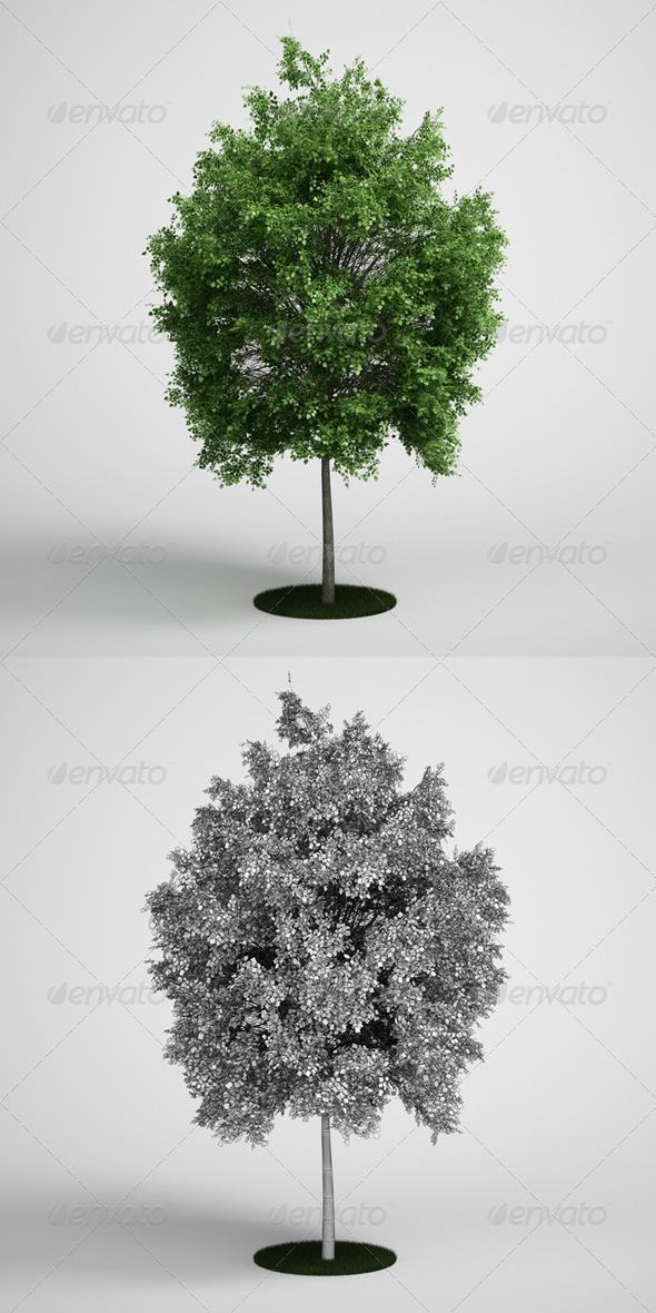 3DOcean CGAxis Tree Deciduous 07 168119