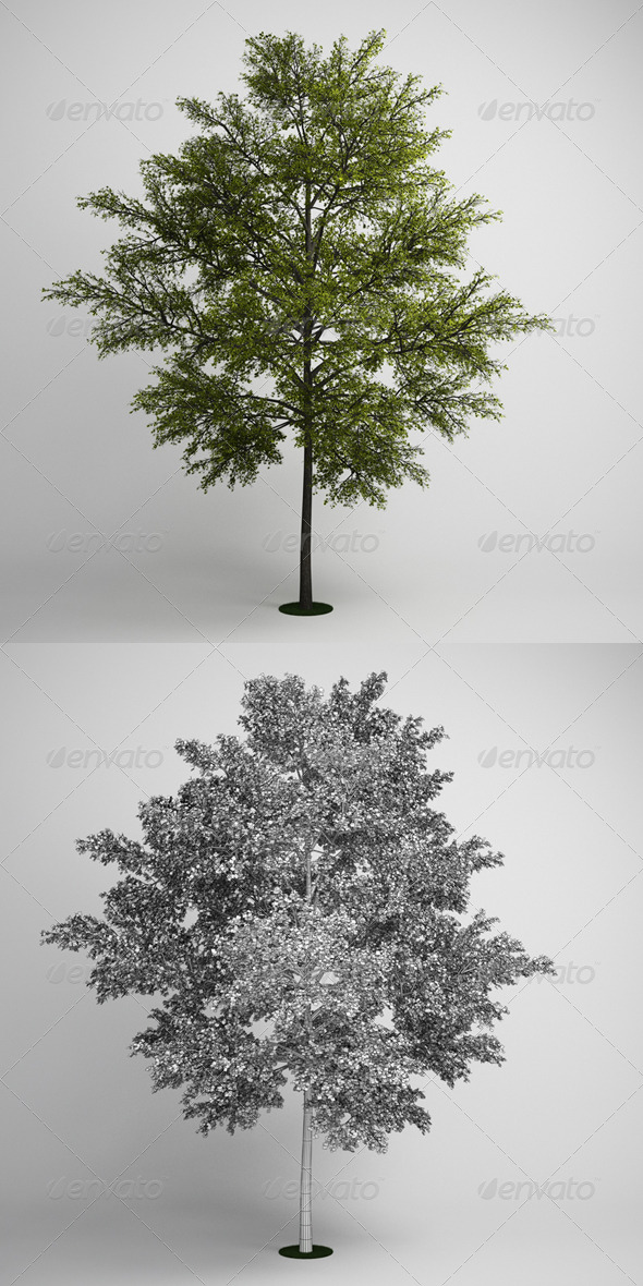 3DOcean CGAxis Tree 10 168123