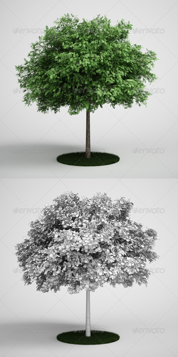 3DOcean CGAxis Tree Black Locust 11 168124