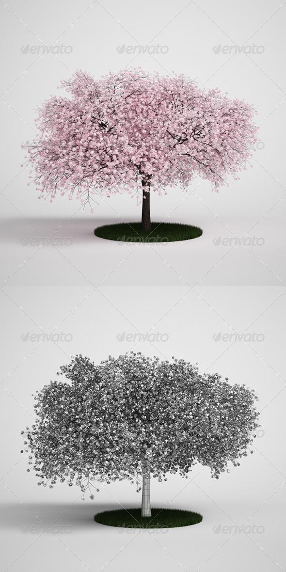 3DOcean CGAxis Flowering Tree 12 168127