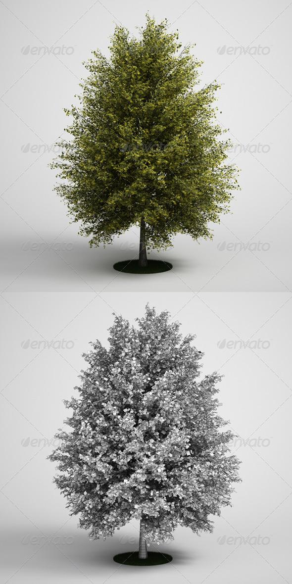 3DOcean CGAxis Tall Tree Ginkgo 13 168128
