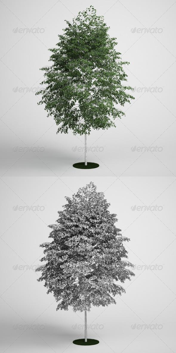 3DOcean CGAxis Birch Tree 14 168129
