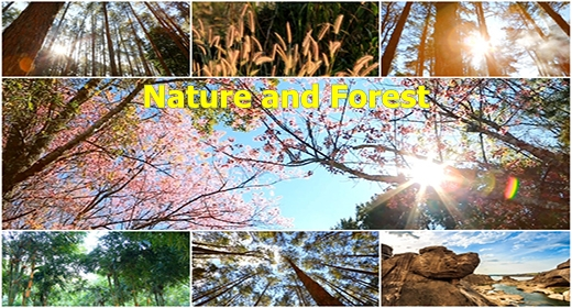 Nature and Forest