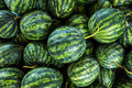 close up green watermelon for agriculture produce