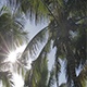 Sun in the Palm Tree - VideoHive Item for Sale