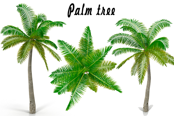 Palm - 3DOcean Item for Sale