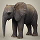 Low Poly Realistic Baby Elephant