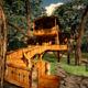Tree House + Scene