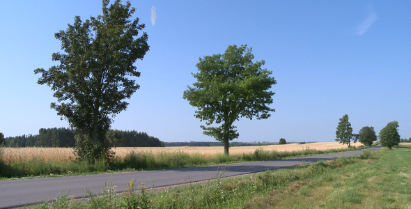 Road in the fields