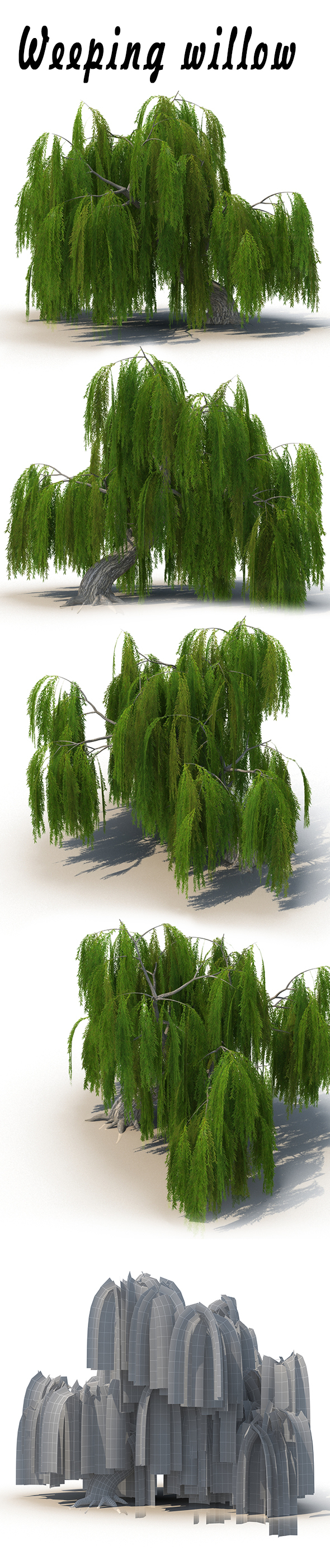 Weeping willow - 3DOcean Item for Sale