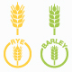 Types of Grains