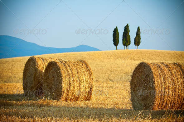Tuscany summer landscape - Stock Photo - Images