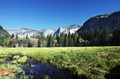 Spring in Yosemite - PhotoDune Item for Sale
