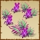 Tubular Purple And Green Marine Seaweed