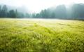 Summer meadow - PhotoDune Item for Sale