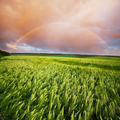 Rainbow in field - PhotoDune Item for Sale