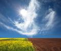 Summer field - PhotoDune Item for Sale