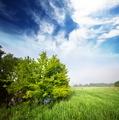 Tree in field - PhotoDune Item for Sale
