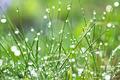 Wet grass - PhotoDune Item for Sale