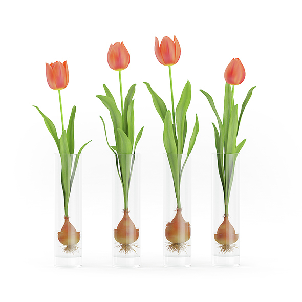 3DOcean Four Tulips in Glasses 14558622