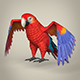 Low Poly Realistic Parrot