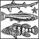 19 Illustrations of sea animals