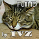 Sleeping Cat - VideoHive Item for Sale