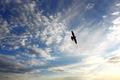 Bird on sky - PhotoDune Item for Sale