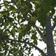 Tree pack - 21 Deciduous Trees