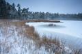 frozen forest lake in winter